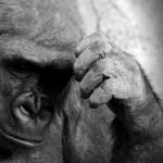 Инстинкты (и почему их нет у человека)
