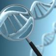 Я уже писал, почему  близнецовый метод оценки коэффициента наследуемости (h2) не работает именно для человека (или точнее, даёт систематическую ошибку в сторону переоценки). Но к настоящему времени у генетиков и эволюционистов накопились не меньшие претензии и собственно к коэффициенту наследуемости h2, связанные с т.н. «фантомной наследуемостью». Она состоит в том, что при высоких цифрах h2 для разного рода признаков (таких как болезнь, биохимический синдром, физиологическое состояние или паттерн поведения), оцененных классическими методами статгенетики, изменчивость по конкретным генным локусам, влияние которых на этот признак удаётся выявить в широкомасштабных исследованиях, объясняет лишь меньшую часть этих оценок.