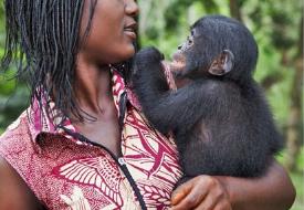 Американские антропологи обнаружили, что юные шимпанзе охотно делятся пищей со сверстниками, но с возрастом становятся всё более жадными. У бонобо детское добродушие сохраняется на всю жизнь. Другие особенности поведения бонобо тоже указывают на некоторую «задержку развития» по сравнению с шимпанзе. Новые результаты подтвердили гипотезу, согласно которой изменения в скорости и хронологической последовательности формирования разных психических черт играют важную роль в эволюции человекообразных.