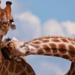 Что первично, поведение или состояние животного?