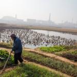 Растущая озабоченность экопроблемами в Китае
