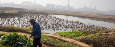 Власти Китая, надо отметить прямо, предпринимают громадные усилия для исправления ситуации с городской экологией и охраной природы на общенациональном уровне. Более того, их усилия признаны...