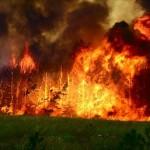 Проблемы лесного хозяйства