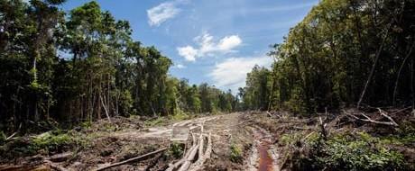 Индонезийский совет улемов в начале марта месяца опубликовал фетву, запрещающую нелегальную охоту и торговлю видами, занесенных в Красную книгу и находящихся под охраной.