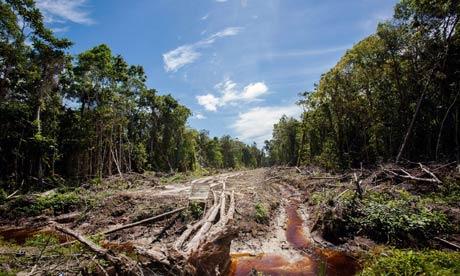 Расчищенная лесная дорога под пальмовую плантацию. Природа Индонезии находится под постоянным давлением со стороны быстро развивающихся секторов экономики: с/х, лесной отрасли, логистики и транспортных перевозок.