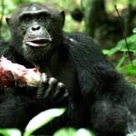 Против «обмена еды на секс»