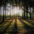 11 апреля 2012 Москва приняла экоопасный  закон №12, фактически снявший все ограничения на строительство на территориях Природного комплекса: это почти все городские  леса и вообще все участки луговых и водно-болотных ландшафтов...