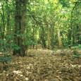 Год назад в развитие и без того экоопасного закона №12, Мосгордума голосами «Единой России» приняла поправки к нему, практически ликвидирующее статус ООПТ для природных территорий города...