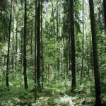 Зачем Москве Химкинский лес и другие городские леса?