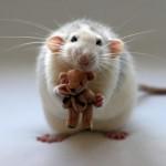 Крысы и право собственности