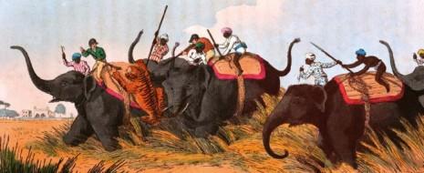 Истории о хищниках-людоедах всегда пользуются повышенной популярностью у читателей. «Кумаонские людоеды» Корбетта и «Людоеды Цаво» Паттерсона, возможно, являются самыми известными охотничьими книгами в мире.