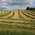 Ужасающие цифры потерь почвенных ресурсов известны давно и обсуждаются довольно часто на международных и национальных экологических и почвоведческих форумах.