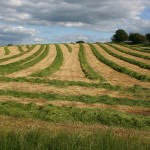 Про почвозащитное земледелие будущего