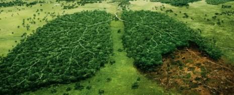 Первичная продукция в экосистемах аналогична ВВП в экономике – это масса новообразованного органического вещества за определённый период времени (обычно год). Её делят на валовую и чистую: первая – всё органическое вещество...