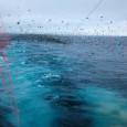 Американские ученые на основе анализа глобальных баз данных вывели новое экологическое правило. Оно гласит: треть рыбных запасов оставляем морским птицам. Это значит, что сохранение устойчивости популяций морских птиц требует...