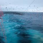 Одну треть рыбных запасов оставить птицам — новый закон в экологии