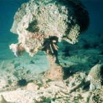 Кораллы гибнут из-за органических загрязнений