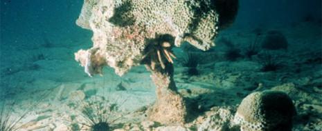 В серии экспериментов, проведенных на кораллах Большого Барьерного pифа, был выявлен триггерный механизм, запускающий гибель кораллов. Ни толстый слой осадка, ни дефицит кислорода, ни подкисление среды сами по себе...