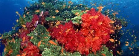 Рифовые системы являются геоморфологическим барьером, седиментационными и химико-биологическими фильтрами в направленном от суши к океану потоке влияния гео-биосферных процессов. Геоморфологический барьер рифовой системы...