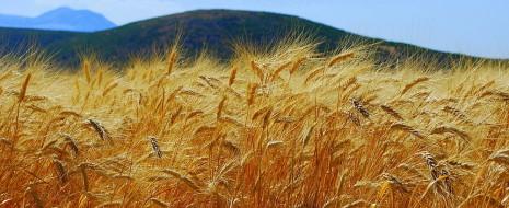 Для сравнения потенциальной продуктивности с/х разных стран уместен метод почвенно-климатических аналогий, показывающий верхний потолок урожайности, который фермеры данной страны в благоприятных социально-экономических условиях могут достичь (а могут и не...