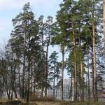 Бизнес атакует «зелёные острова» Москвы