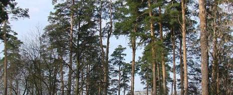 Столичные власти, открыто признающиеся, что работают на застройщиков и другие группы крупного капитала, не на жителей, начали наступление на последние крупные «острова» естественных экосистем – Измайловский лес, Лосиный остров и (меньший, но важный)...
