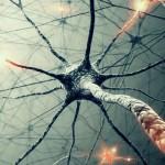 Зеркальные нейроны и интуиция (отрывок из книги)