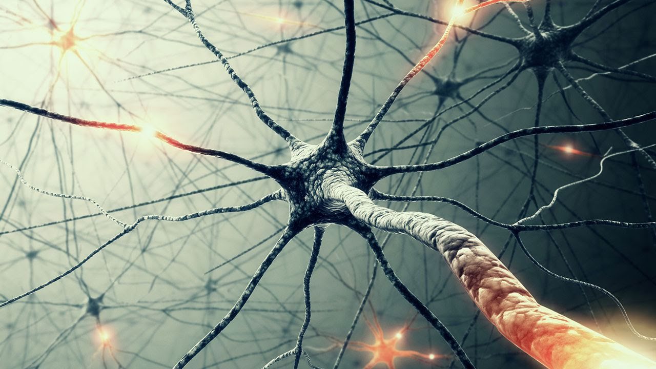 001_59_Thoughts-on-Mirror-Neurons-Why-we-feel-Empathy