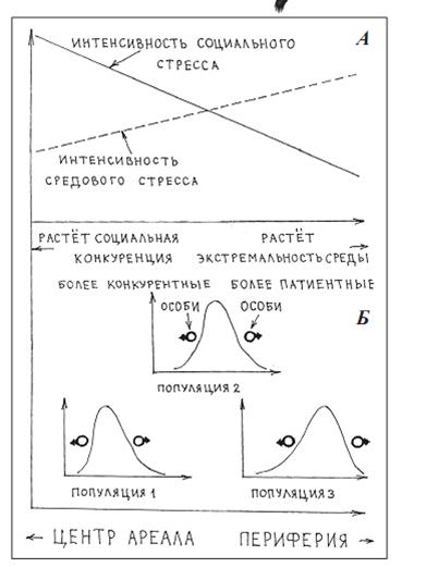 Популяционная система вида согласно «морфологическому подходу»: градиенты «центр – периферия» ареала (А) с сортировкой особей по потенциям (степень развития конкурентной и патиентной стратегий) вдоль них (Б).