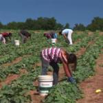 Невидимые дети в индустрии: опасный детский труд в США и «третьем мире»