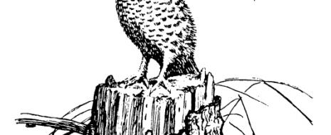 Не будь революции, рябчики кончились бы гарантированно и для буржуев. Тогда не было сети пригородных птицефабрик, поставлявших дешёвое мясо, а при имевшей место интенсивности промысла, заданной потреблением птицы в крупных городах, рябчики, тетерева...