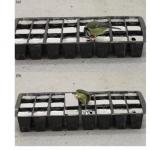 Ещё про «конформизм» в трансляции поведенческих стереотипов у птиц