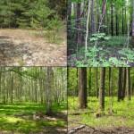 Теоретические основы единой стратегии охраны природы  и природопользования