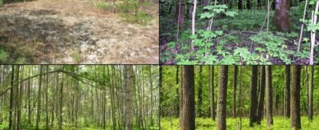 Оба способа общения с природой (использование «воспроизводимых» ресурсов и отказ от их использования - заповедание) не позволяют достичь желаемого эффекта, необходимого для устойчивого существования...