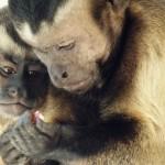 Тренд «психологизации поведения» животных