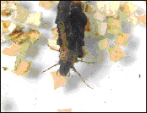 Личинка пробует частицу
