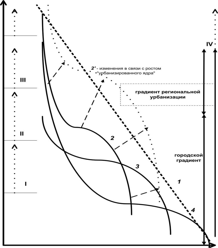 Рисунок 1. Городской градиент: падение степени урбанизации территории (1) и степени изменённости городом природных ландшафтов, представляющих собой естественные местообитания вида (2-4) от центра города (I) к его границе (II) и далее к периферии зоны влияния города, III. IV – радиус центральной агломерации и потенции его изменения в процессе роста урбанизированного «ядра» (штрих-пунктирные стрелки). Пунктирная стрелка – вектор изменений урбосреды в процессе городского развития
