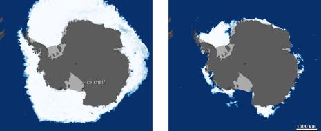 В отличие от Северного Ледовитого Океана, антарктический лед в основном однолетний - он образуется зимой и летом тает. Площадь льда, таким образом, определяется двумя...