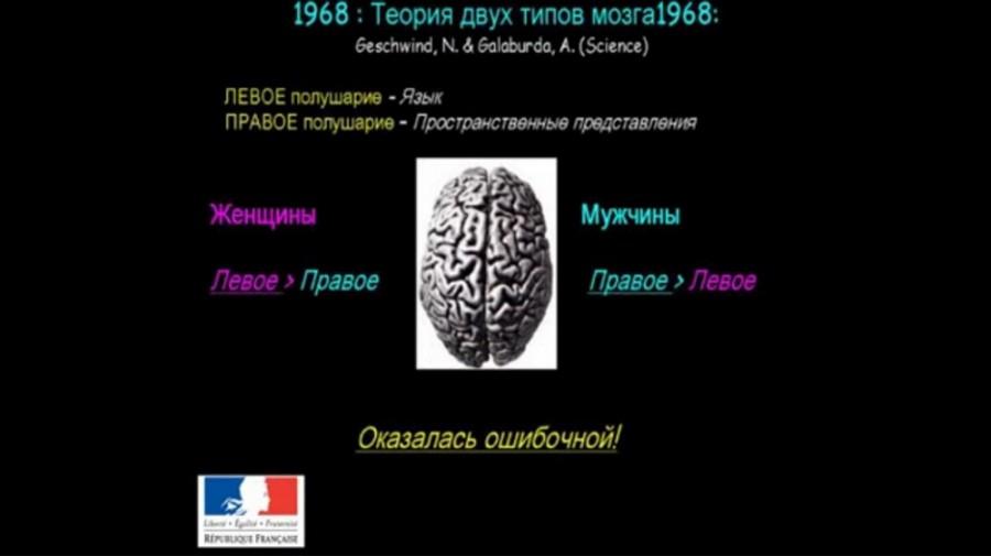 Источник. Никаких нейробиологических предпосылок к гендерной сегрегации не существует. Лекция крупнейшего нейробиолога Франции Катрин Видаль.