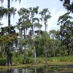 Последствия нефтедобычи в Луизиане