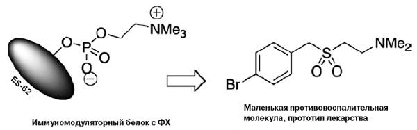Рис. 2. Белок ES-62 и его аналог 11а. Ме — метильная группа (–СН3)