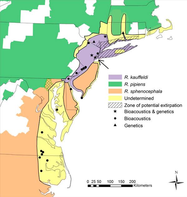 Рис. 3. Ареалы трех близких видов леопардовых лягушек на атлантическом побережье США. Фиолетовым цветом показан подтвержденный ареал R. kauffeldi. Значками на карте отмечены места наблюдений и взятия проб. Серым заштрихованы зоны, откуда вид известен по музейным образцам, но сейчас не встречен; зеленая штриховка обозначает смешение ареалов двух известных ранее видов. Карта из обсуждаемой статьи в PLOS ONE