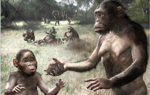 В эволюции человека поражает сочетание инадаптивных и гипертрофированных признаков с общим вектором прогрессивной эволюции. Это противоречие можно...
