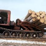 Незаконные рубки лесов в современном мире