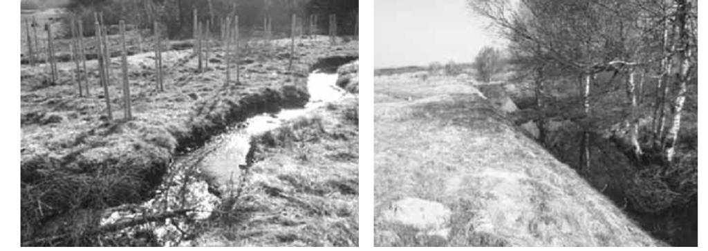 Рис. 8. Слева – новое русло ручья, справа – каскад прудов на старом русле