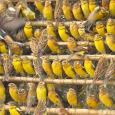 Преследование и сверхэксплуатация людьми - главные причины исчезновений видов. Редкие виды, часто ограниченные маленькими географическими ареалами,...