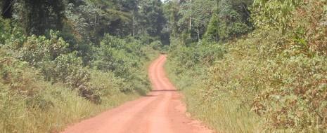 Ожидается, что общая длина дорог в мире к 2050 году вырастет на 60%. Подобное расширение дорожной сети несет огромную угрозу биологическому разнообразию и жизненно важным экосистемным услугам, и для предотвращения этого ущерба требуется глобальная система планирования дорожного строительства...