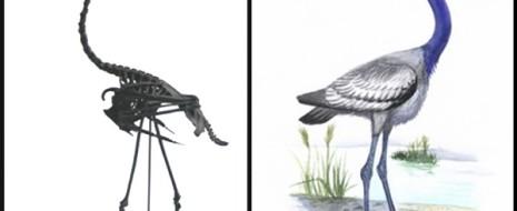 Пересказ важной статьи Н.В.Зеленкова про достижения палеорнитологии последних лет, когда было открыто множество ископаемых групп с мозаичной организацией, проливающих свет на происхождение современных макротаксонов птиц. Происхождение их было во многом неясно...