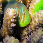 Коралловые рифы перед экологическими угрозами XXI века
