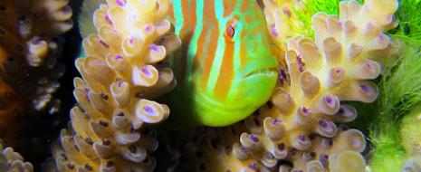 К настоящему времени более четверти тропических коралловых рифов Мировою океана считаются полностью разрушенными, а в ближайшие 30 лет при сохранении нынешней скорости деградации...